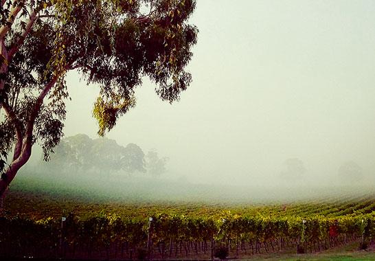 Salute to Australian Shiraz DeBortoli Vineyard