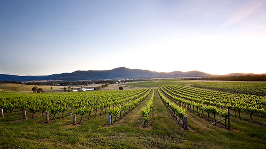 Western Victorian Wine Regions Mount Langi Ghiran vineyard thumb