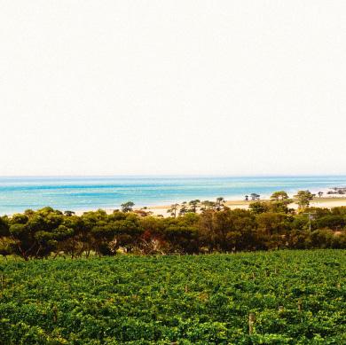 Geelong wine region