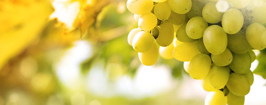 Australian Chardonnay Wine