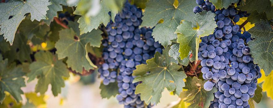 Australian Cabernet Sauvignon Wine