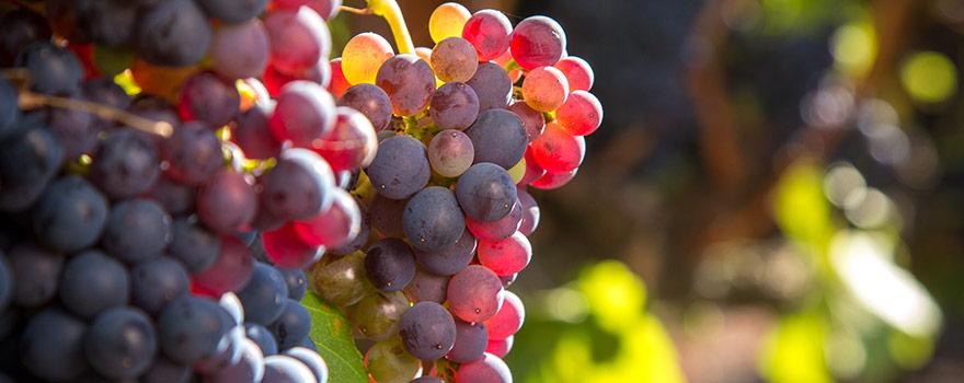 Australian Grenache Wine