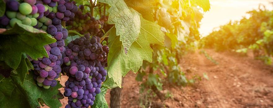 Australian Merlot Wine