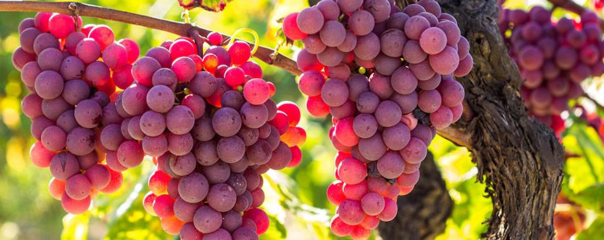 Australian Rose Wine