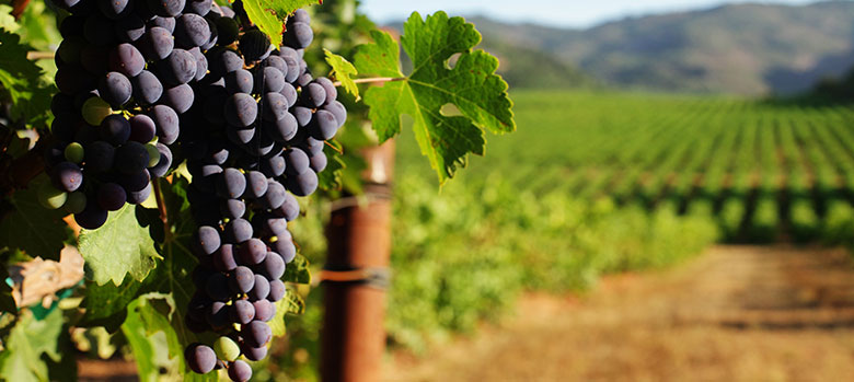 Know Your Variety: Cabernet Sauvignon