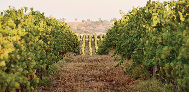 Cumulus Wines Orange NSW