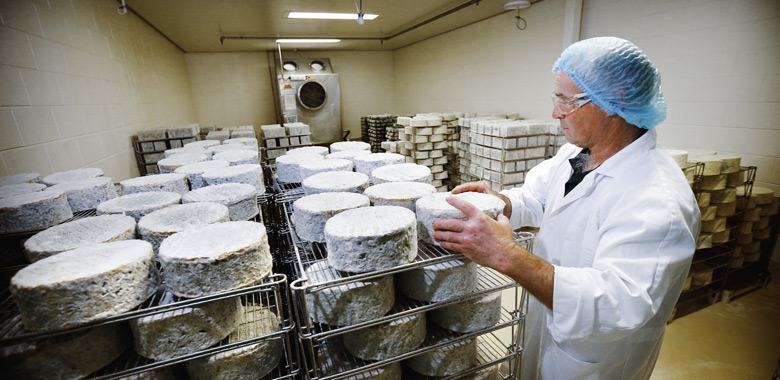 cheese maturing at King Island Dairy