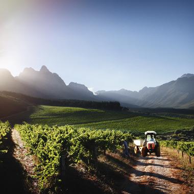 Luxury Wine Trails