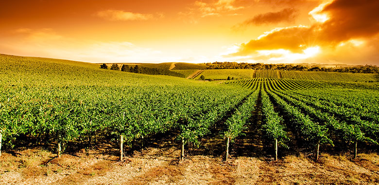 Barossa Guide Nw