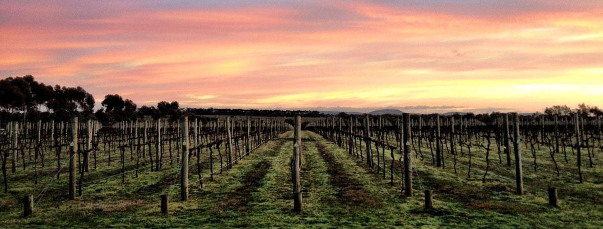 Austin Wines vineyard winery