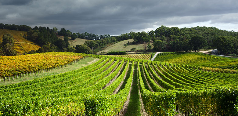 The Best Barossa Valley Wineries & Cellar Doors