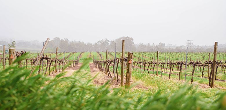 Clare Valley Wineries List Claymore Wines