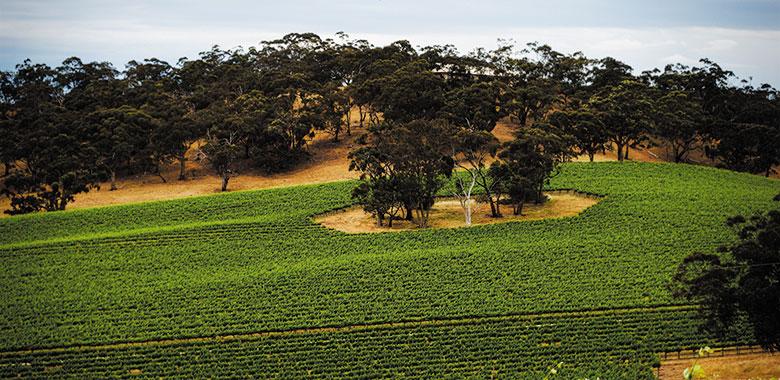 Best Clare Valley Wineries Eldredge