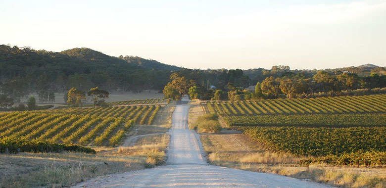 Best Clare Valley Wineries and Cellar Doors