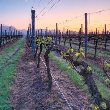 Coombe Farm Yarra Valley Vineyards