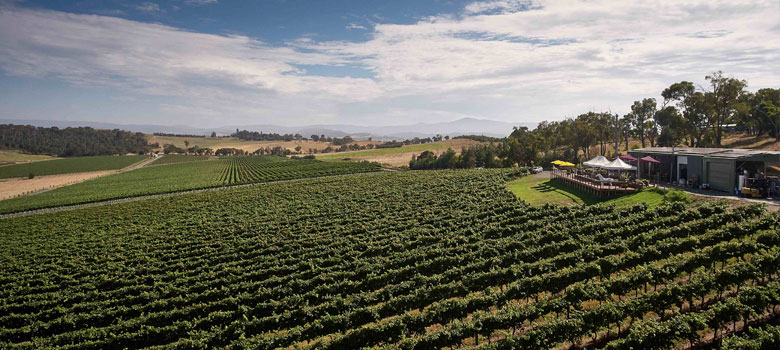 Your Guide to the Yarra Valley's Best Cellar Doors and Wineries