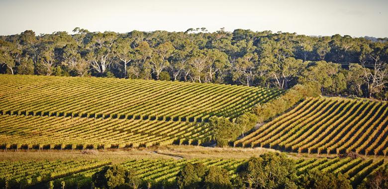 Patchworks of vineyards on the Mornington Peninsula