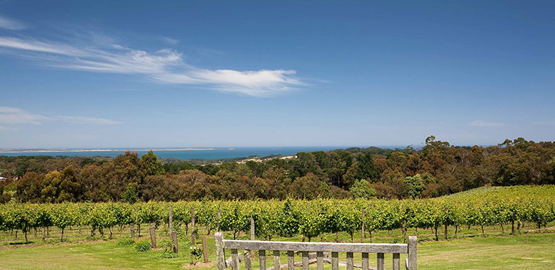 Red Hill Estate Mornington Peninsular Winery with a view