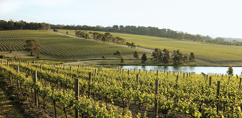 Mornington Peninsular Wineries and Cellar Doors guide