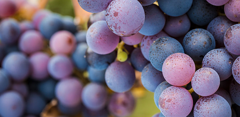 difference between pinot gris vs pinot grigio