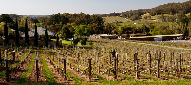 The Adelaide Hills Prosecco Region