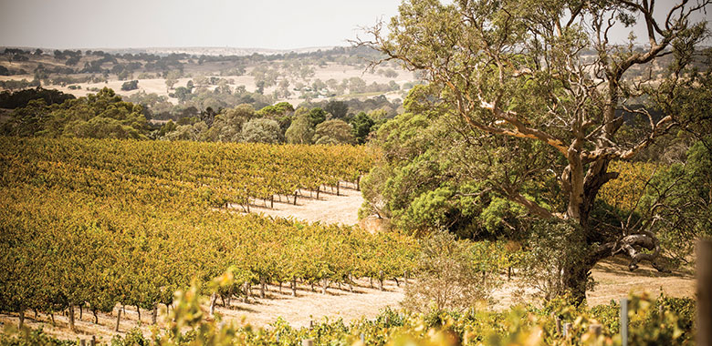 Barossa the home of Australian Viognier Wine