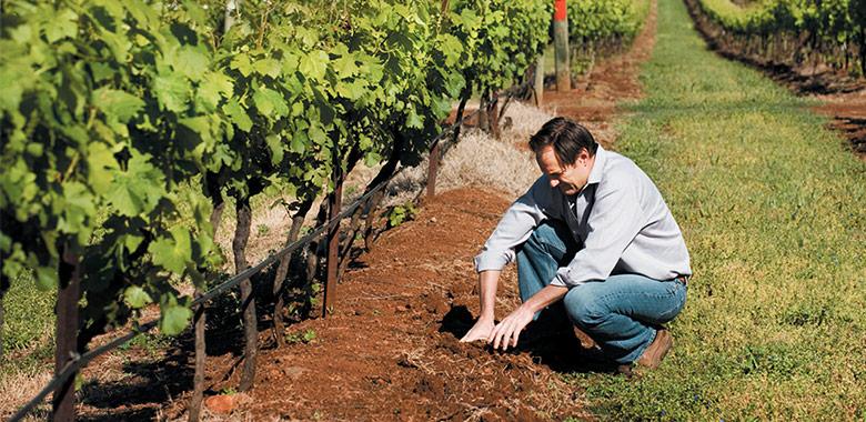 Wine Margan Wines Detail
