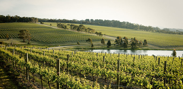 Yabby Lake vineyards