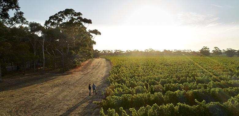 Byron and Harold vineyard