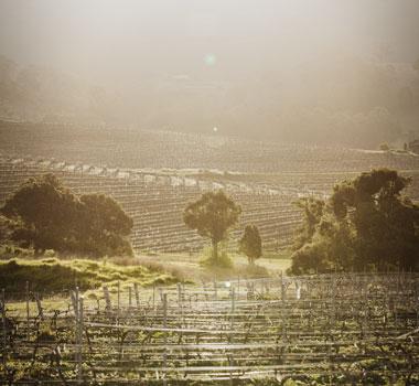 Mount Pleasant vineyard