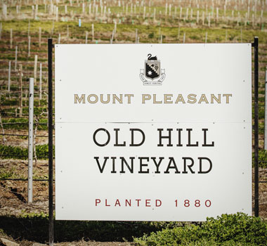 Old Hill vineyard of Mount Pleasant