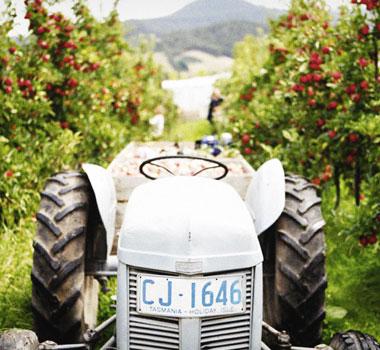 Vineyard scenery in Tasmania