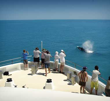 Travel Australia Coral Expeditions