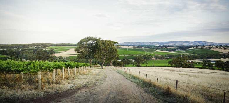 Australian winemaking stars