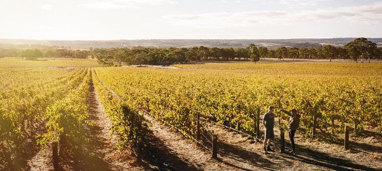 Boutique Wineries Breaking New Ground