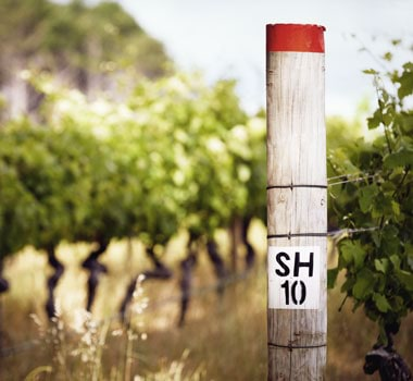 Cape Mentelle vineyard