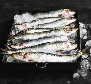 Australian sardines