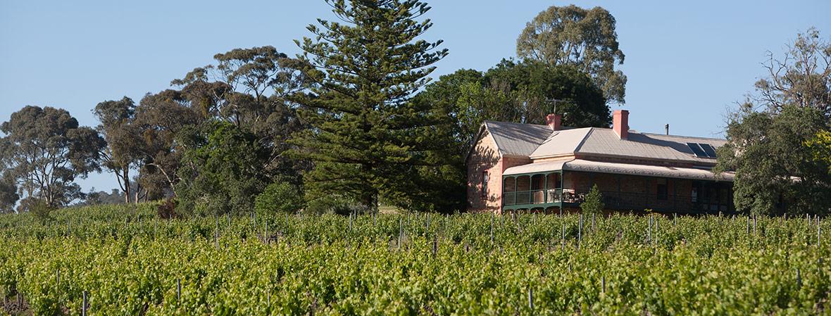 mitchell winery