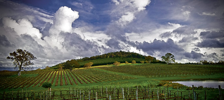 What Is Freight Shipping >> Eden Valley - Wine Selectors