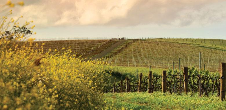 Clare Valley Wine Region