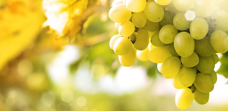 Passionately neutral – Australian wineries fighting the rise of carbon