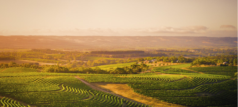 McLaren Vale: No Place Like Home