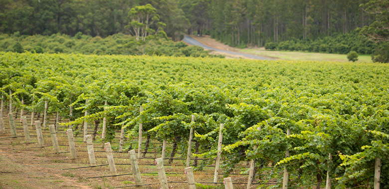 Destination Manjimup: Introducing Peos Estate