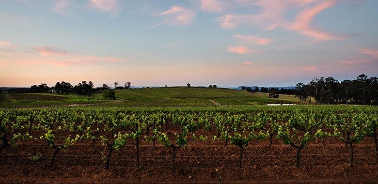 Tyrrells Wines - Sunset over Spring Vineyards