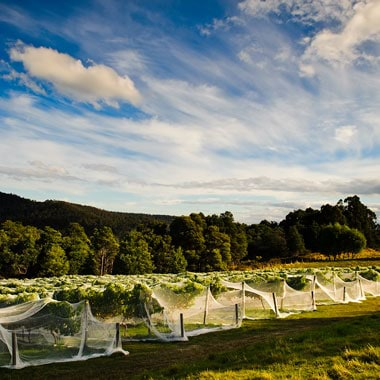 Tasmania wine region
